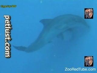 Dolphin dick xxx