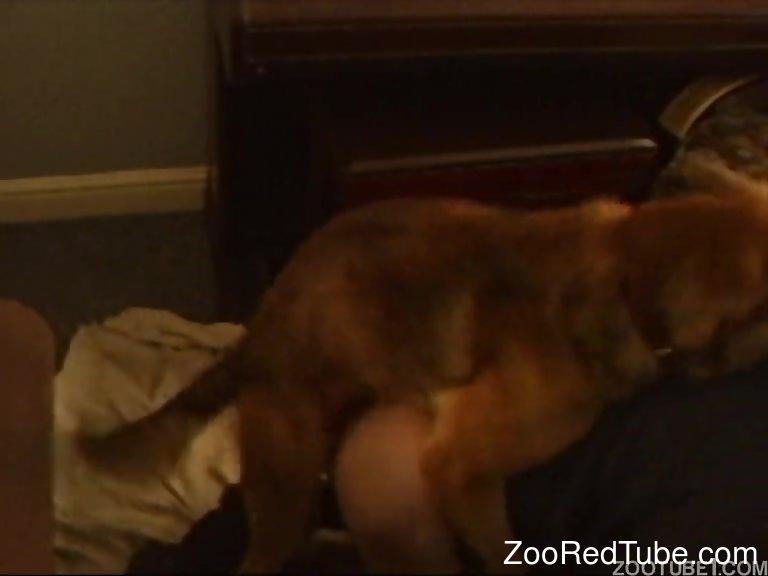 Homemade Dog Sex Porn
