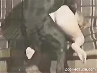 Dark beast with huge dick impales juicy snatch of a bitchy hottie