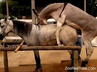 Watch how two awesome ponies have amazing sex at the farm
