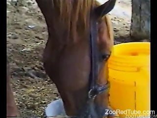 Blondie jockey gives a nice blowjob for a brown stallion