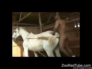 Perverted black guy fucks a sweet white pony in doggy style pose