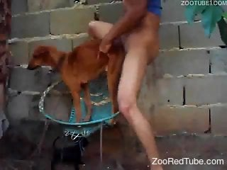 Sweet doggy with tight crack got nicely banged by filthy zoophile
