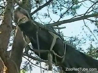 Zoophile outdoor orgy with a beautiful brown horse