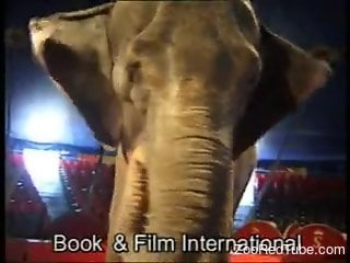 Blond-haired circus beauty seducing a sexy elephant
