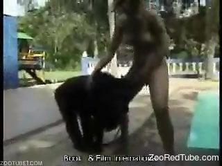 Horny black monkey gets a nice blowjob from a slut