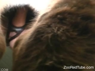 Blonde fucking a mare's pussy with a strap-on