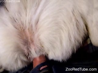Dude with a nice dick fucking a sexy animal from behind
