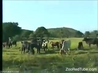 Retro video featuring a prolific animal fucker