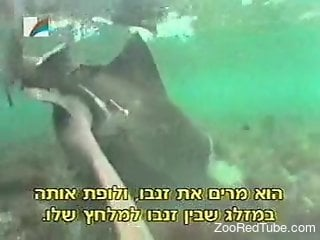 Underwater zoo porn fetish for the horny scuba diver