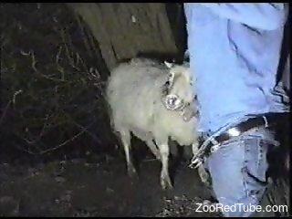 Denim-clad stud fucking a sheep's throat on camera