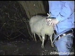 Denim-clad dude fucking a sheep's hot throat on cam
