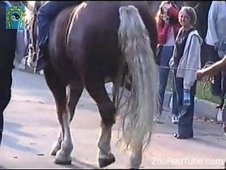 Horny stallion showcasing its huge dick in public
