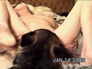 Cunnilingus porno movie focusing on a dog and its tongue