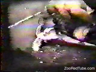 Vintage fucking video focusing on true bestiality