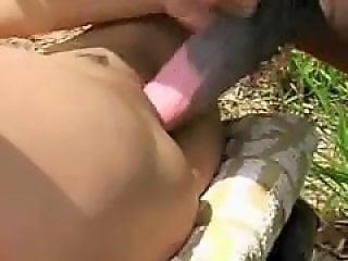 Horse Gay Tube
